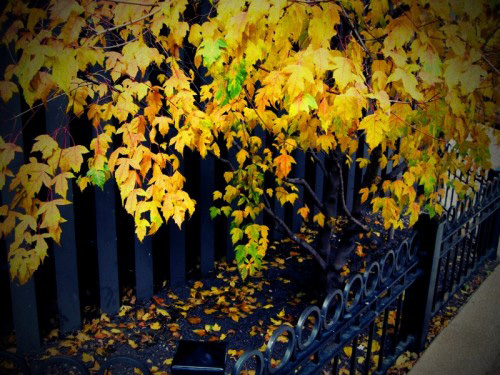 Autumnleaves3small