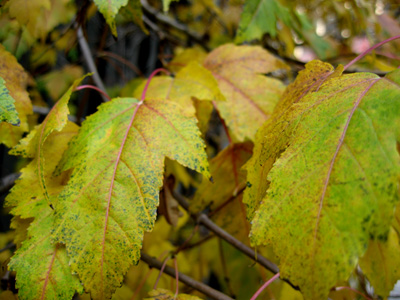 Autumnleaves1small