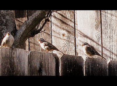 Bird6a
