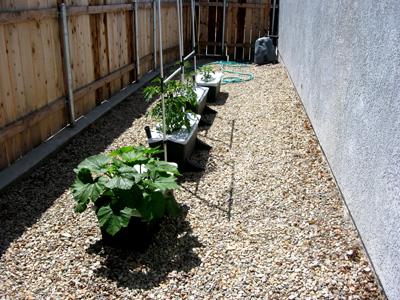 Garden52509