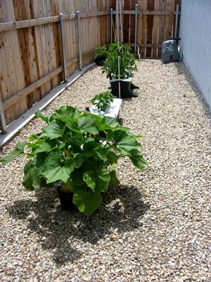 Garden060609