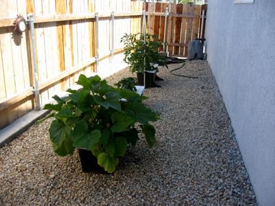 Garden061209