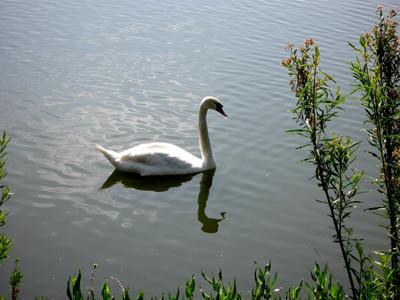 Lake2a