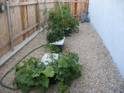 Garden081309