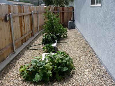 Garden082309