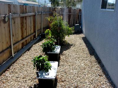 Garden102509