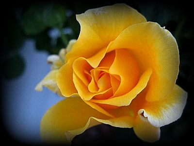 Bloom3