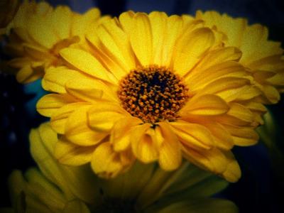 Autumnflowersmall