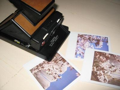 Polaroid1a