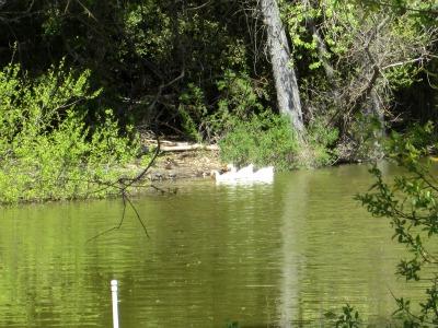 Atascadero Lake 4