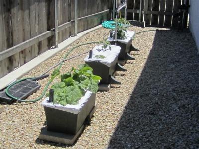 Week Five Garden