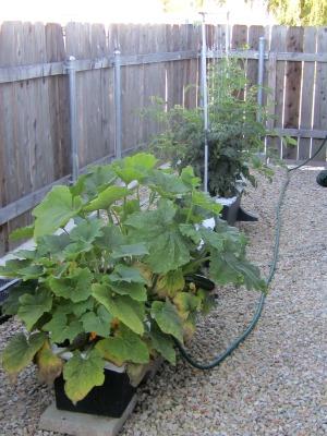 Garden070211