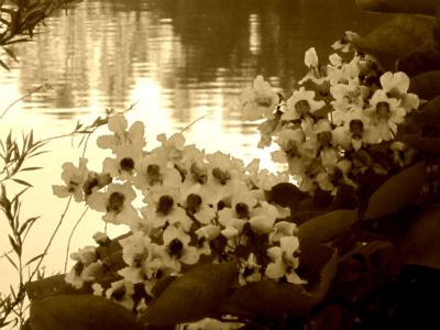 Flowersbythelake