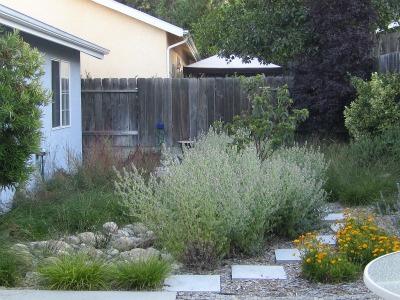 Backyard2072411
