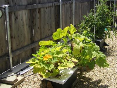 Gardenendofjuly1