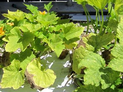 Gardenendofjuly2