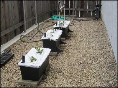 Garden april 23 2011