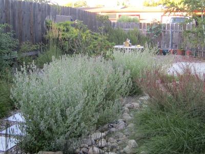 Backyard172411