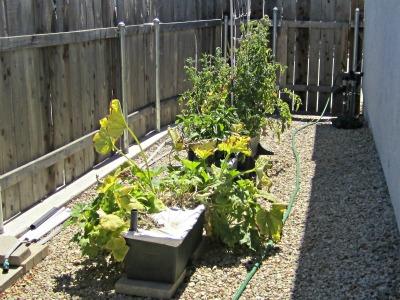 Garden9411a