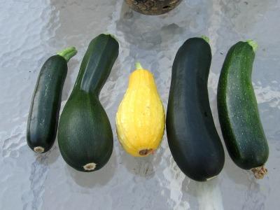 Harvest070211