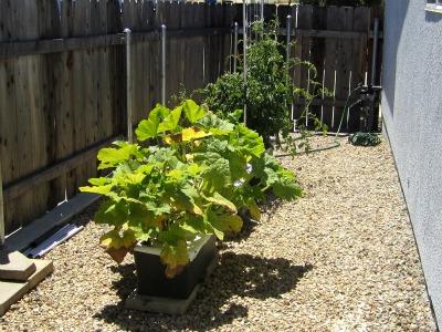 Garden171711
