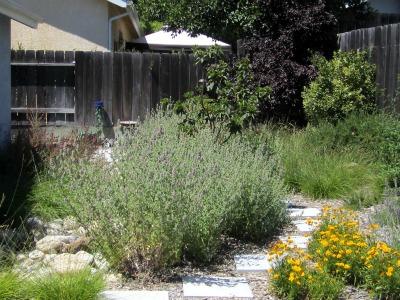 Backyard71711