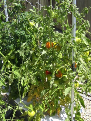 Gardenendofjuly8