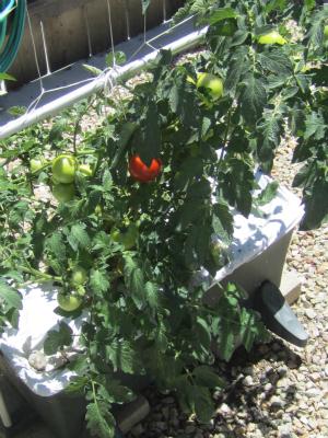 Garden72212002