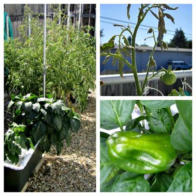 Garden8512small