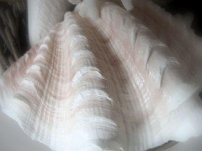 Seashells5