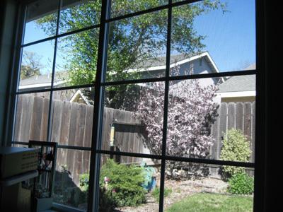 Backyard31608