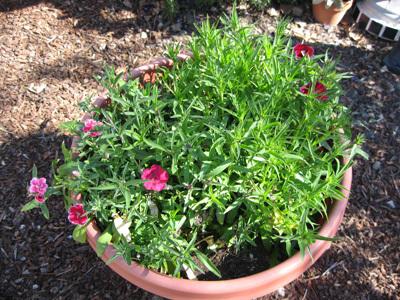 Lastyearsflowers