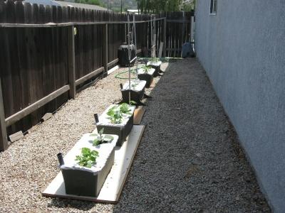 Garden51108