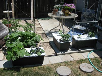 Garden52608