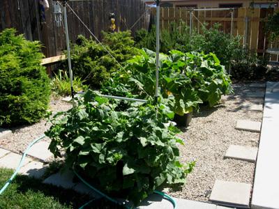 Garden62908