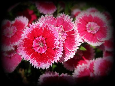 Pinkflowers400300