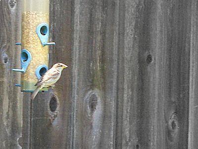 Birdatfeeder