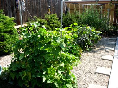 Garden72008