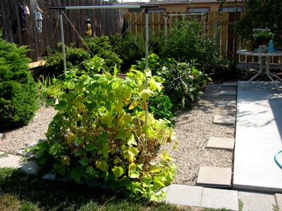 Garden72608