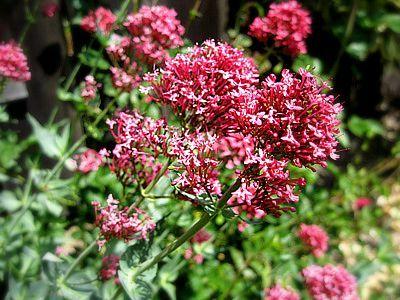 Unknownflowers