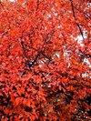 Autumn3_1