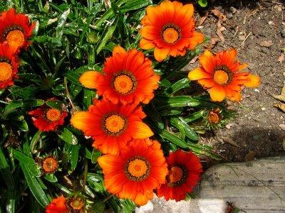 Orangeflowers_2