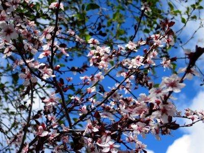 Pinkflowers2a_1