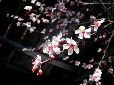 Pinkflowers5_1