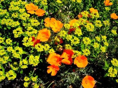 Wildflowers2_1